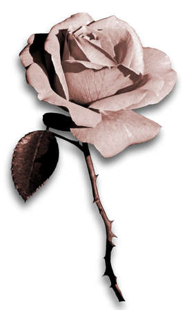 depiction: Rose  Grungy depiction of a single rose flower  Stock Photo