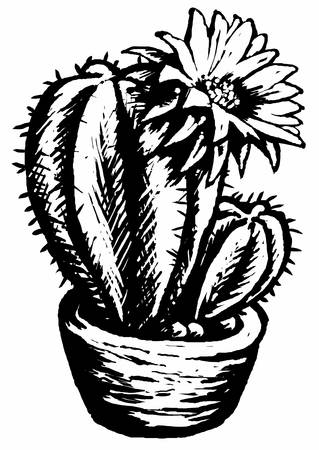 flowerpots: Funny cactus Illustration of a cactus and a marguerite in black and white