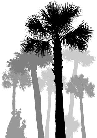Palm trees Illustration of several palm trees in black  Vector