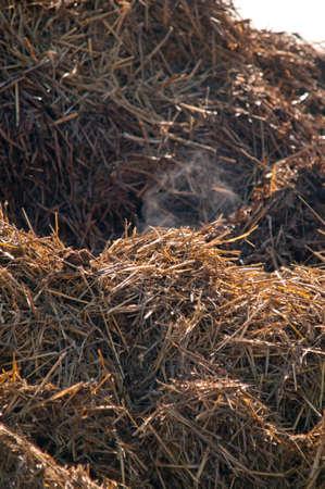 muck: Dungheap dunghill muckheap bog hole manure pile muck hill