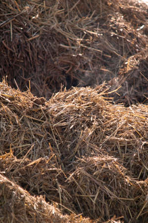 Dungheap dunghill muckheap bog hole manure pile muck hill