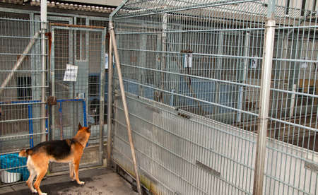 animal shelter: dog in a dungeon at Animal Shelter