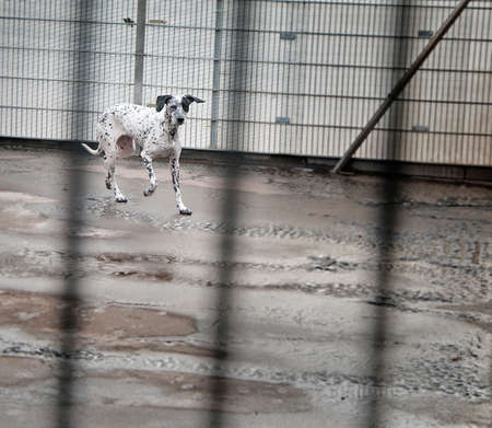safekeeping: dog in a dungeon at Animal Shelter