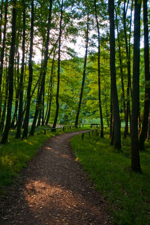forrest: footpath in a forrest Stock Photo