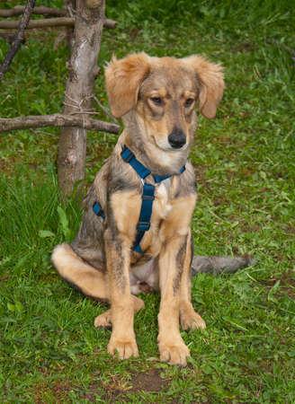 puppydog: Advertent puppydog waiting for command