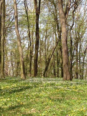 springtime: forest in springtime