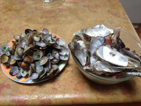 wastes: empty shells Stock Photo
