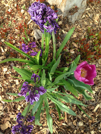 springtime: springtime flowers Stock Photo