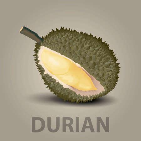 king thailand: durian Illustration