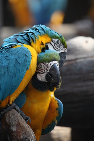 clicked: Blue Parrots Clicked with all their lovely emotions