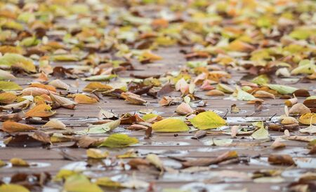 footway: Central Focus of fallen leafs on the wooden footway