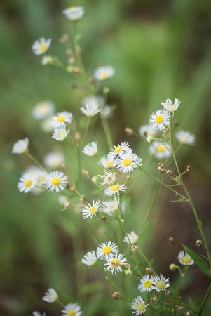 wild flowers: wild flowers in center focus