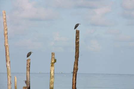 bird on the wood photo