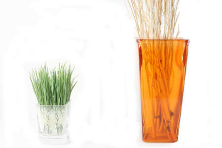 Grass in a glass of water, with branches in a vase  photo