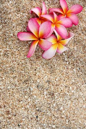 pink Leelawadee flower on the white sand  photo