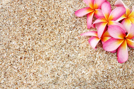 pink Leelawadee flower on the white sand
