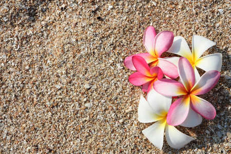 pink leelawadee flower on the sand  photo