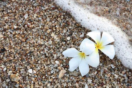 leelawadee: white leelawadee on the beach with wave