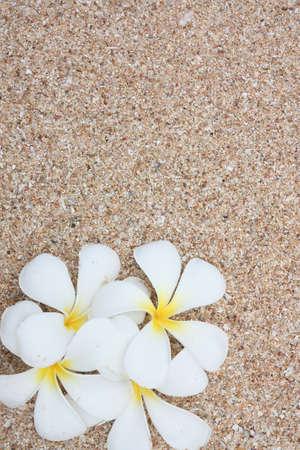 leelawadee: White Leelawadee on sand Stock Photo