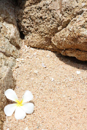 White Leelawadee on sand photo