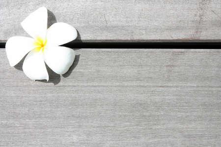 leelawadee: white leelawadee on wooden Stock Photo