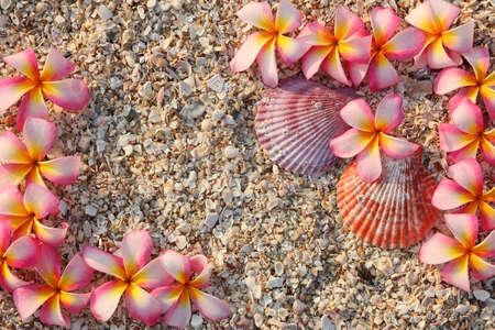 leelawadee: leelawadee flower with shell on Shell scrap and sand Stock Photo