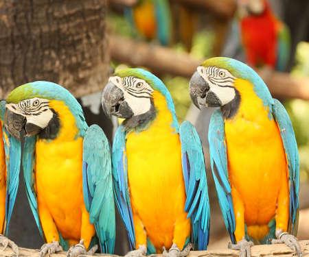 Macaw bird sitting on the perch photo