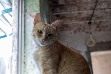 A cat looking towards the camera in a house