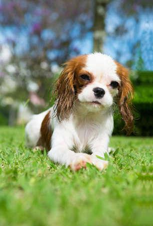 잔디에 귀여운 강아지 스톡 콘텐츠
