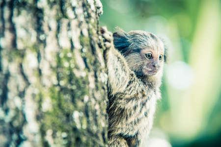 야생 원숭이