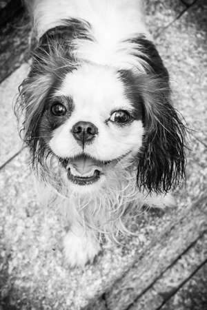 Cute dog looking up in black and white