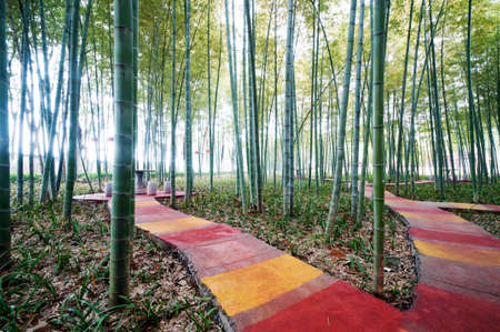 path in bamboo forest photo