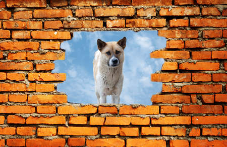 porous wall to see the dog photo