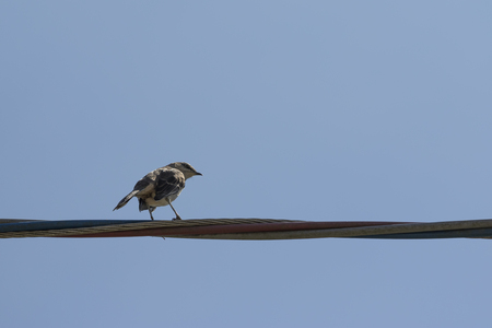 bird perched on wire with blue sky