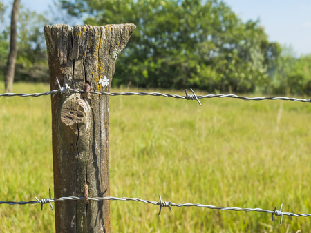 wire fence: close up detail of farm fence post with barbed wire and grass background