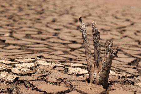 건조하는 동안 빈 댐의 금이 지상에 죽은 나무