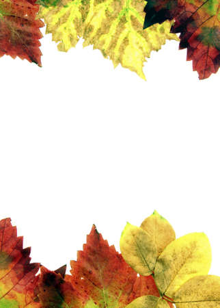Pictures of dried leaves for textures photo