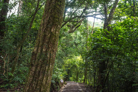 Path of the Rincon de la Vieja National Park