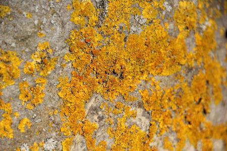 Yellow moss on grey limestone