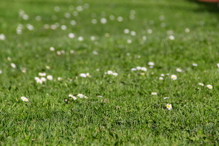 Grass in foreground with some daisies in the background