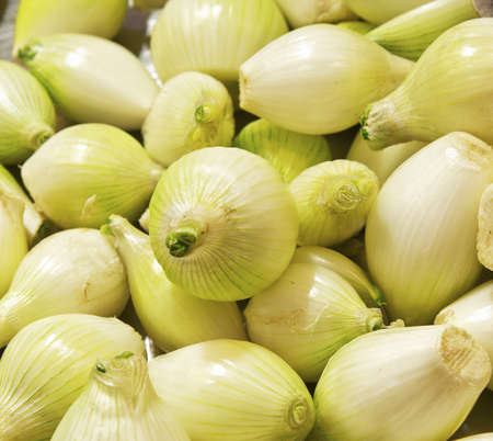 Onions closeup