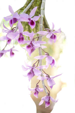 Spring orchid flower photo