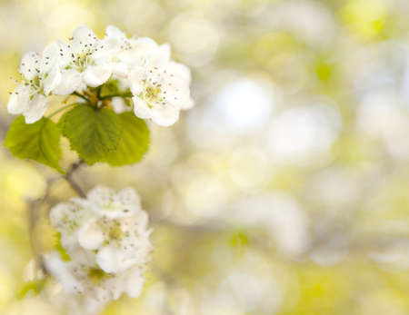 Primavera fiore di orchidea Archivio Fotografico