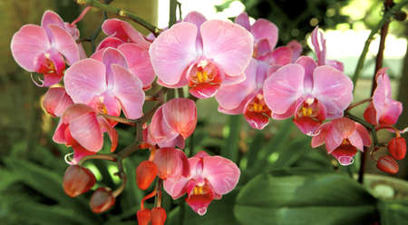 Summer orchid flowers at daylight