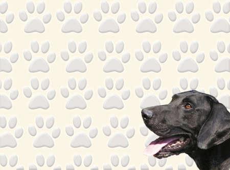 A dog head against a dog tracks background photo