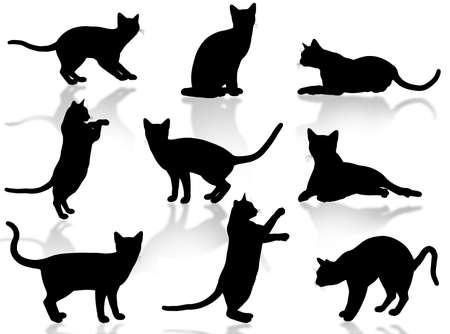 silueta de gato: Ilustraci�n sobre gatos divertidos silueta en poses t�picas  Foto de archivo