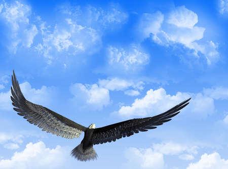 白い雲と空を背景に、ワシ飛行