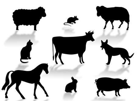 Farm animals silhouettes with shadows on a white background Stock Photo