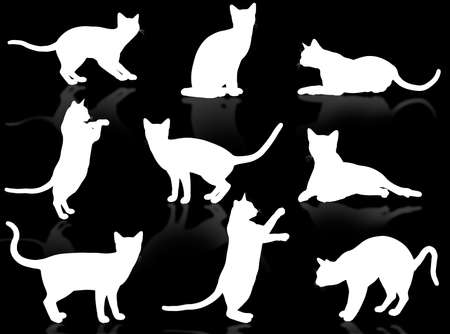typical: White funny cats silhouette in typical poses