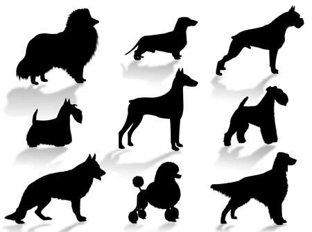 Dogs silhouette to represent different dog breeds Stock Photo